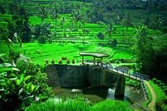 水坝传统领域的稻 免版税图库摄影