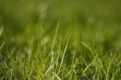水多和鲜绿色的草 ?? E 草的纹理 库存图片