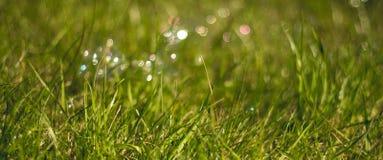 水多和鲜绿色的草 ?? E 草的纹理 库存照片