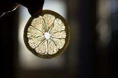 水多的切片柠檬通过落日的光芒发光并且明亮地发光 库存图片