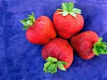 水多的成熟草莓 免版税库存照片