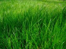 水多的草 免版税库存图片