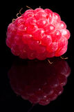 水多的莓 免版税库存照片