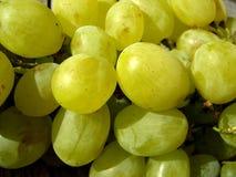 水多的葡萄 免版税库存图片