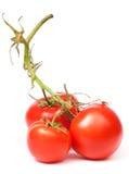 水多的蕃茄 库存照片