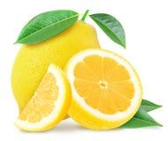 水多的黄色柠檬和切片与叶子 免版税库存照片