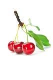 水多的cherrys 免版税库存照片