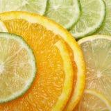 水多背景的柑橘 库存图片