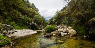 水小河在森林里 库存照片