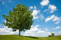 水平的唯一结构树 库存照片