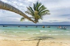水平的棕榈树 免版税库存图片