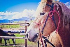 水平的照片描述美丽的可爱的棕色和白马 免版税图库摄影