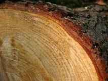 水平的环形结构树 图库摄影