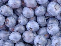 水平蓝色的蓝莓 免版税图库摄影