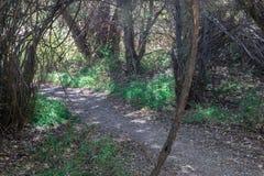 水平,湖罗伯特供徒步旅行的小道 库存照片