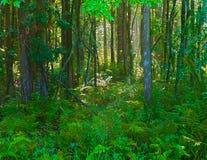水平1森林的hdr 库存图片