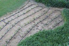 水庭院和领域的软管排列 库存图片