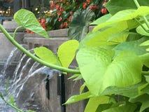 水庭院绿叶 库存图片
