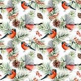 水彩与红腹灰雀的冬天样式 手画鸟,与锥体,在白色隔绝的莓果的杉木分支 皇族释放例证