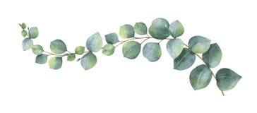 水彩与绿色玉树叶子和分支的传染媒介花圈 向量例证