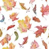 水彩五颜六色的枫叶和菩提树种子样式 图库摄影