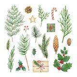 水彩传染媒介圣诞节设置与常青针叶树分支、莓果和叶子 向量例证