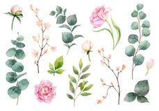 水彩传染媒介手绘画套牡丹花和绿色叶子 库存例证