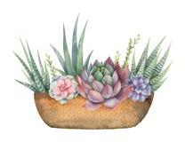 水彩传染媒介结构的仙人掌和多汁植物在白色背景隔绝的罐 库存图片