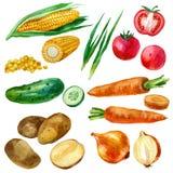 水彩例证,集合,菜的图象 库存图片
