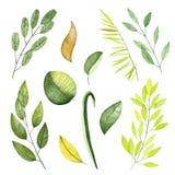 水彩元素 汇集包括的叶子和分支 库存例证
