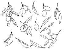 水彩剪影用黑橄榄、分支和叶子 手画花卉集合 在白色隔绝的例证 库存例证