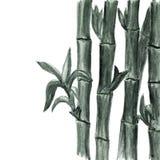 水彩单色竹背景 皇族释放例证