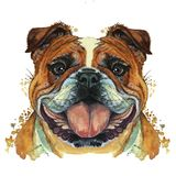 水彩印刷店,在狗,哺乳动物,动物品种的题材的印刷品,养殖英国牛头犬,牛头犬,画象,颜色r 向量例证