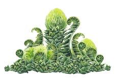 水彩史前植物 库存例证