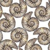 水彩史前贝壳