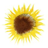 水彩向日葵绘画 免版税库存图片