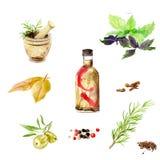 水彩图画 橄榄,被设置的香料 皇族释放例证