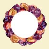 水彩圆的框架用在颜色背景的整个和被切的果子李子创造性的设计的 图库摄影