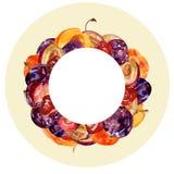 水彩圆的框架用整个和被切的果子:李子、樱桃和桃子在颜色背景创造性的设计的 免版税库存图片