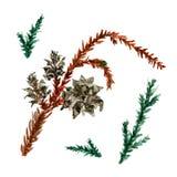 水彩圣诞树分支 与在白色背景隔绝的冷杉针自然元素的手画纹理 免版税图库摄影