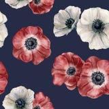 水彩在深蓝背景的银莲花属样式 手画被隔绝的红色和白花 design illustration space 库存照片