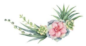 水彩在白色背景和多汁植物隔绝的传染媒介花圈仙人掌 库存例证