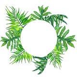 水彩在白色背景隔绝的圆的框架热带叶子和分支! 热带绿色留下框架! 库存图片