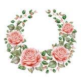水彩在白色背景隔绝的玫瑰花圈 库存图片