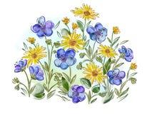 水彩在草甸开花紫罗兰和蝴蝶花并且离开 免版税图库摄影