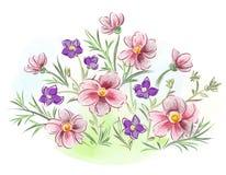 水彩在草甸开花紫罗兰和蝴蝶花并且离开 库存图片