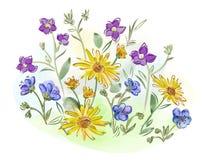 水彩在草甸开花紫罗兰和蝴蝶花并且离开 库存照片
