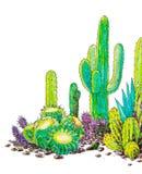 水彩墨西哥的被绘的仙人掌风景 向量例证