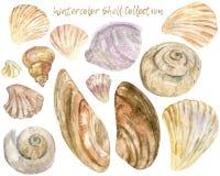 水彩壳剪贴美术汇集 向量例证