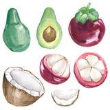 水彩夏天汇集异乎寻常的热带水果 在白色背景的手画异乎寻常的coctails 库存图片